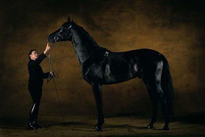 yab_cheval