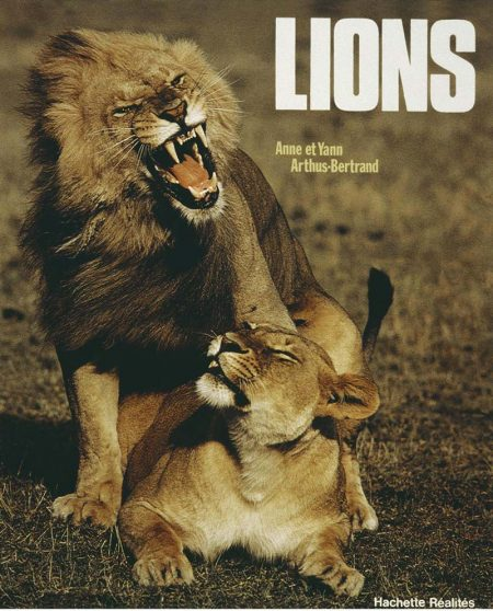 yab_lion