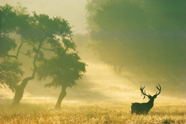 Le Cerf, France - Yann Arthus-Bertrand Photo