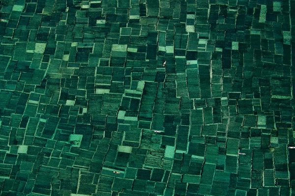 Algaculture, Indonesia - Yann Arthus-Bertrand Photography