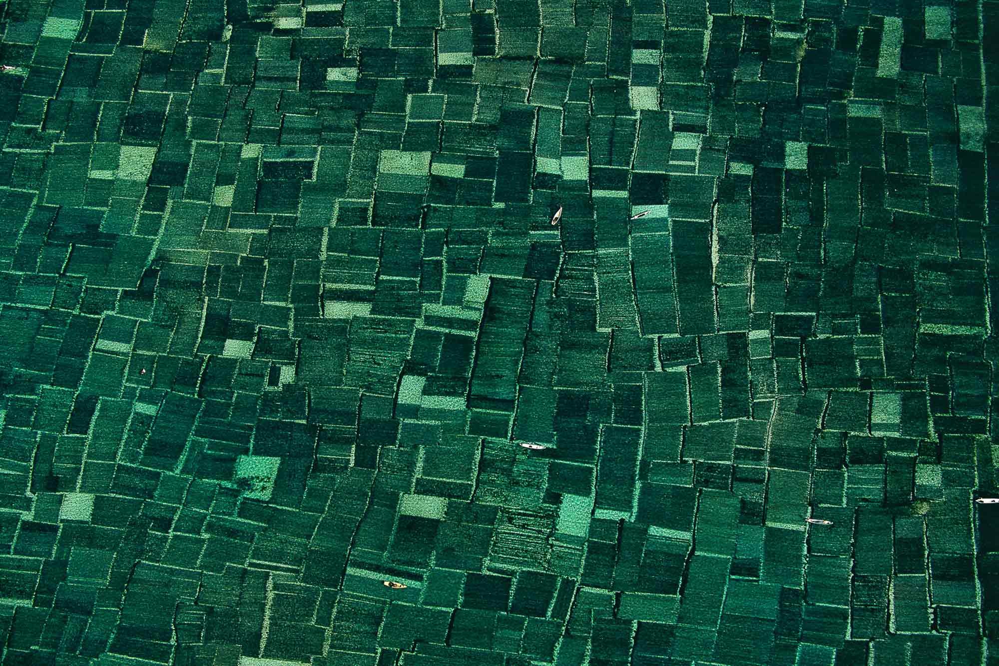 Algaculture - Yann Arthus-Bertrand