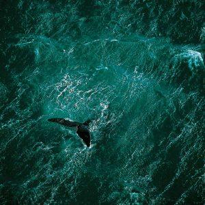 Whale, Argentina - Yann Arthus-Bertrand Photography