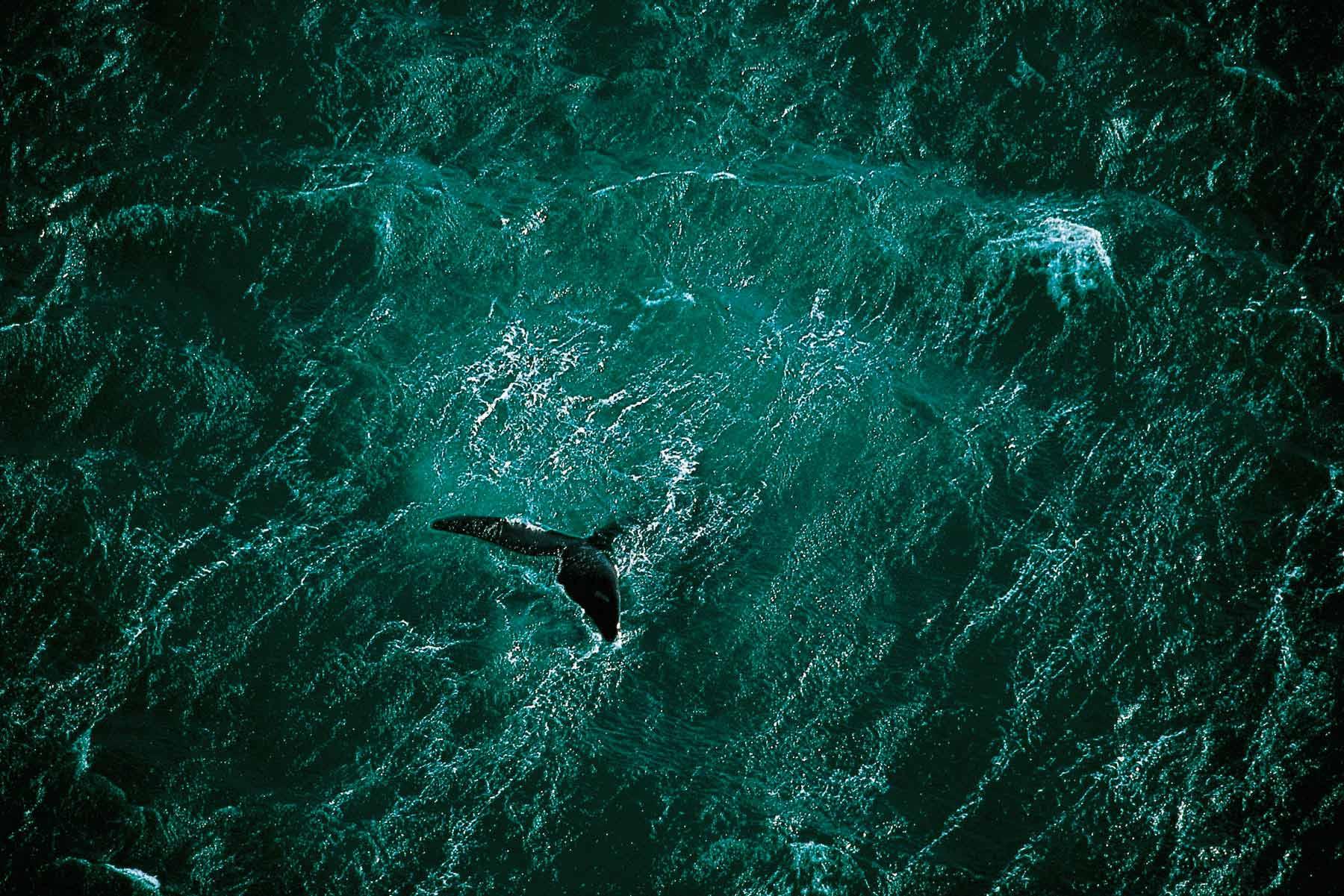 Whale - Yann Arthus-Bertrand