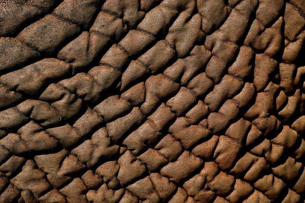 Micro, Kenya - Yann Arthus-Bertrand Photography