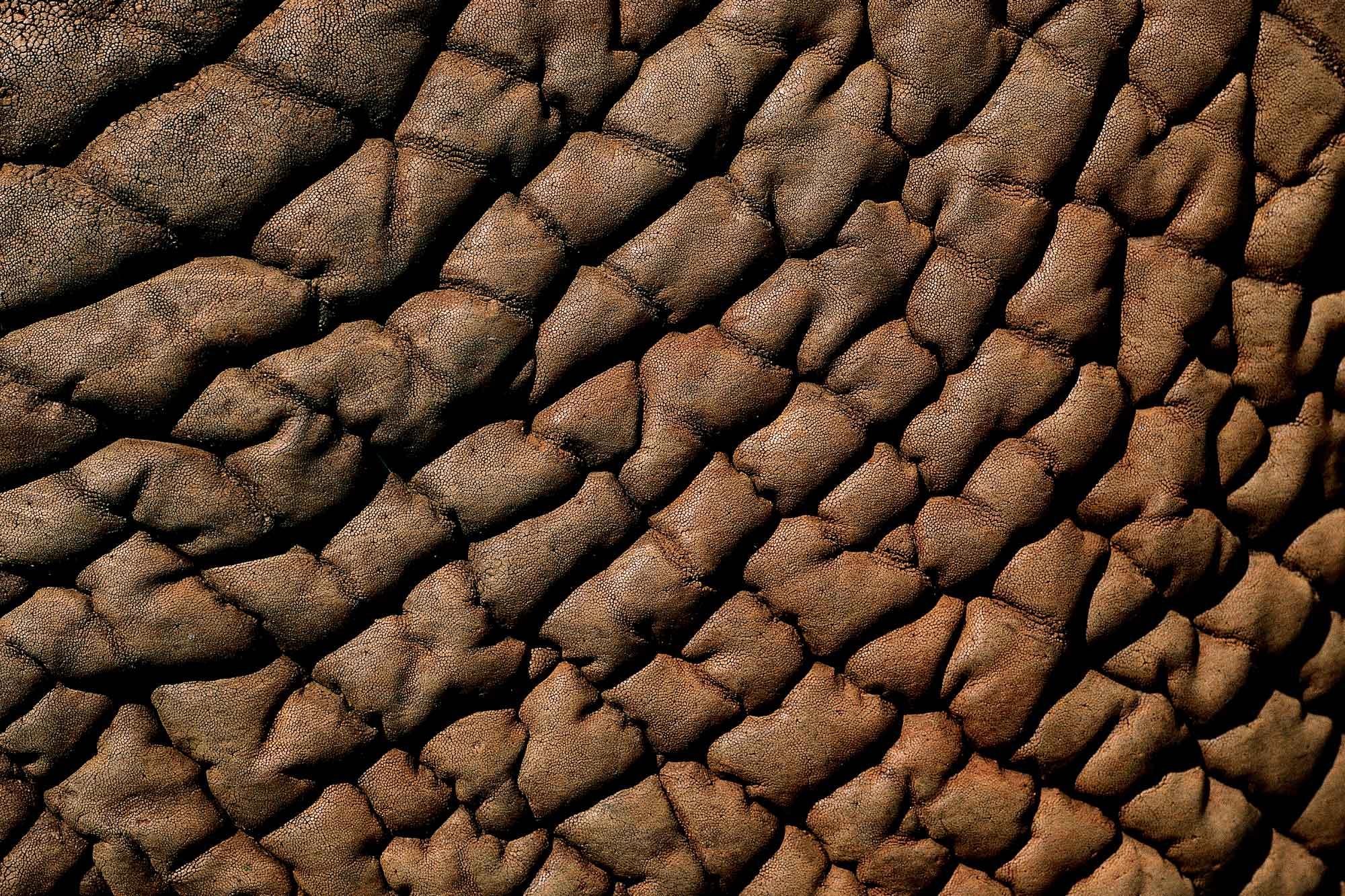 Eléphant - Yann Arthus-Bertrand