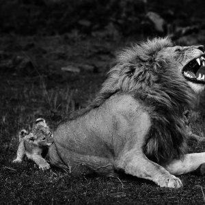 Hook, Kenya - Yann Arthus-Bertrand Photo