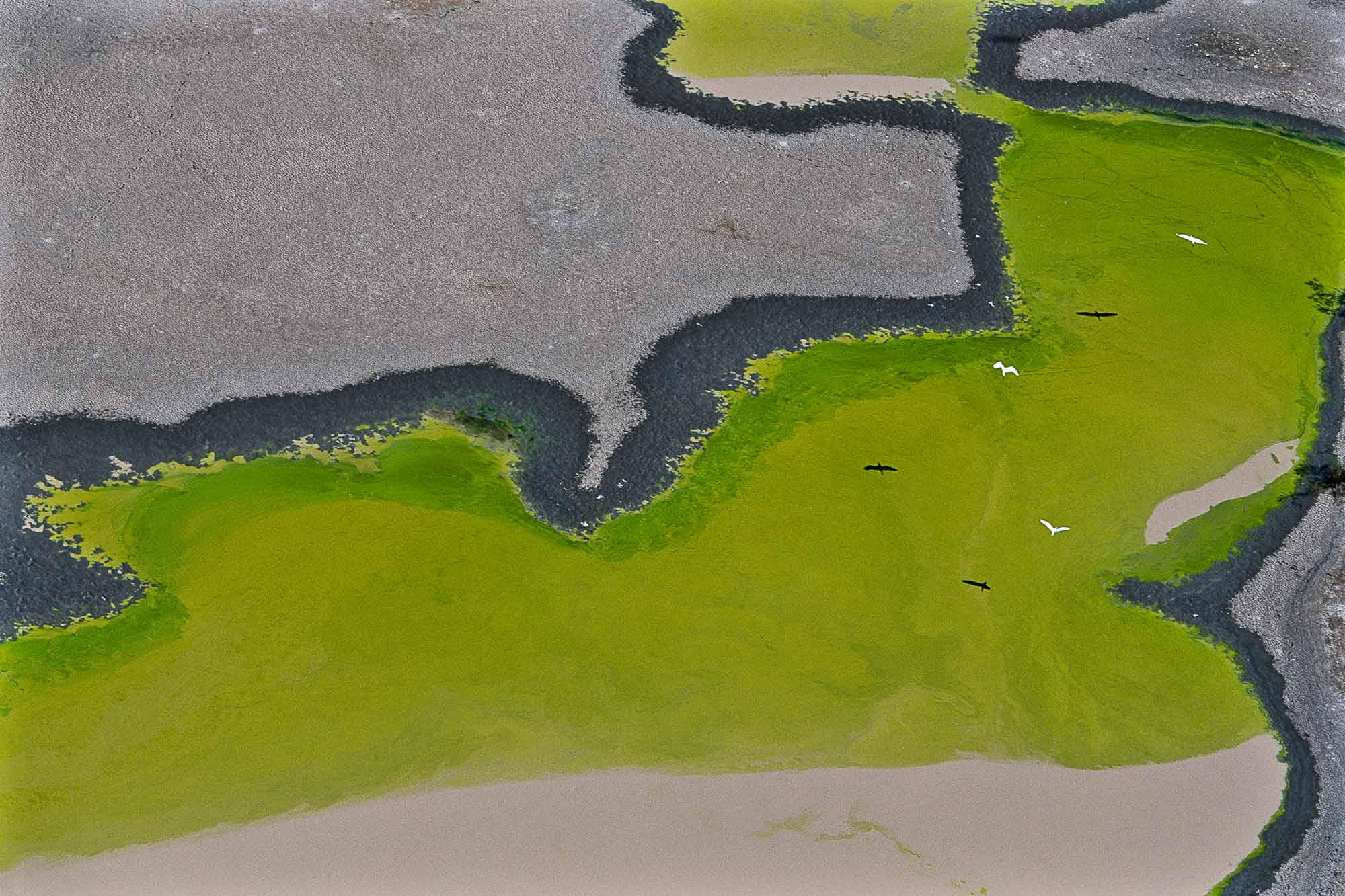 Mangrove - Yann Arthus-Bertrand