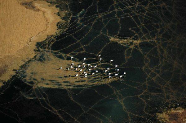 Storks, Algeria - Yann Arthus-Bertrand Photography