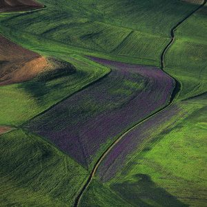 Plain, Algeria - Yann Arthus-Bertrand Photography