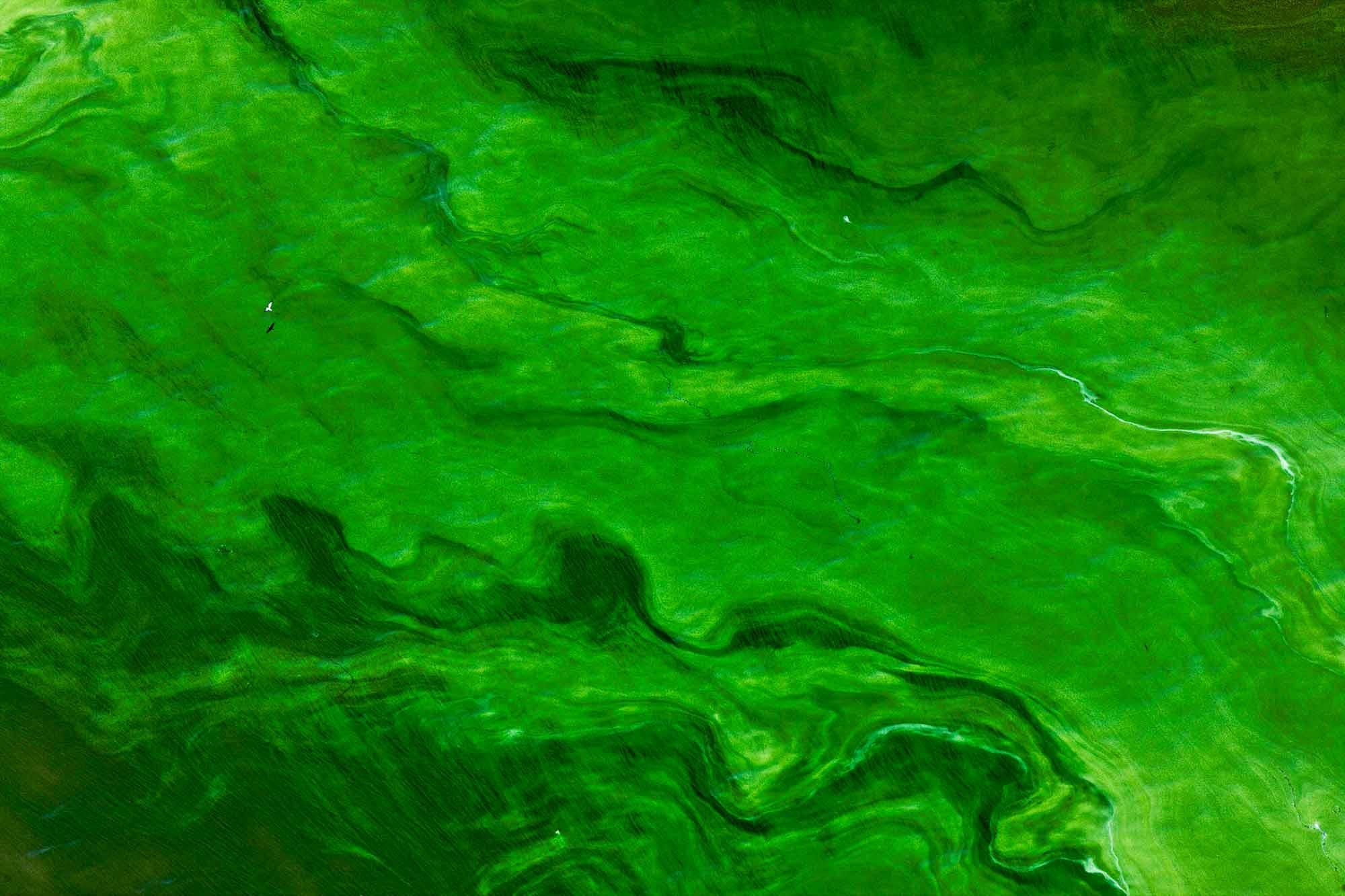 Lake Turkana - Yann Arthus-Bertrand