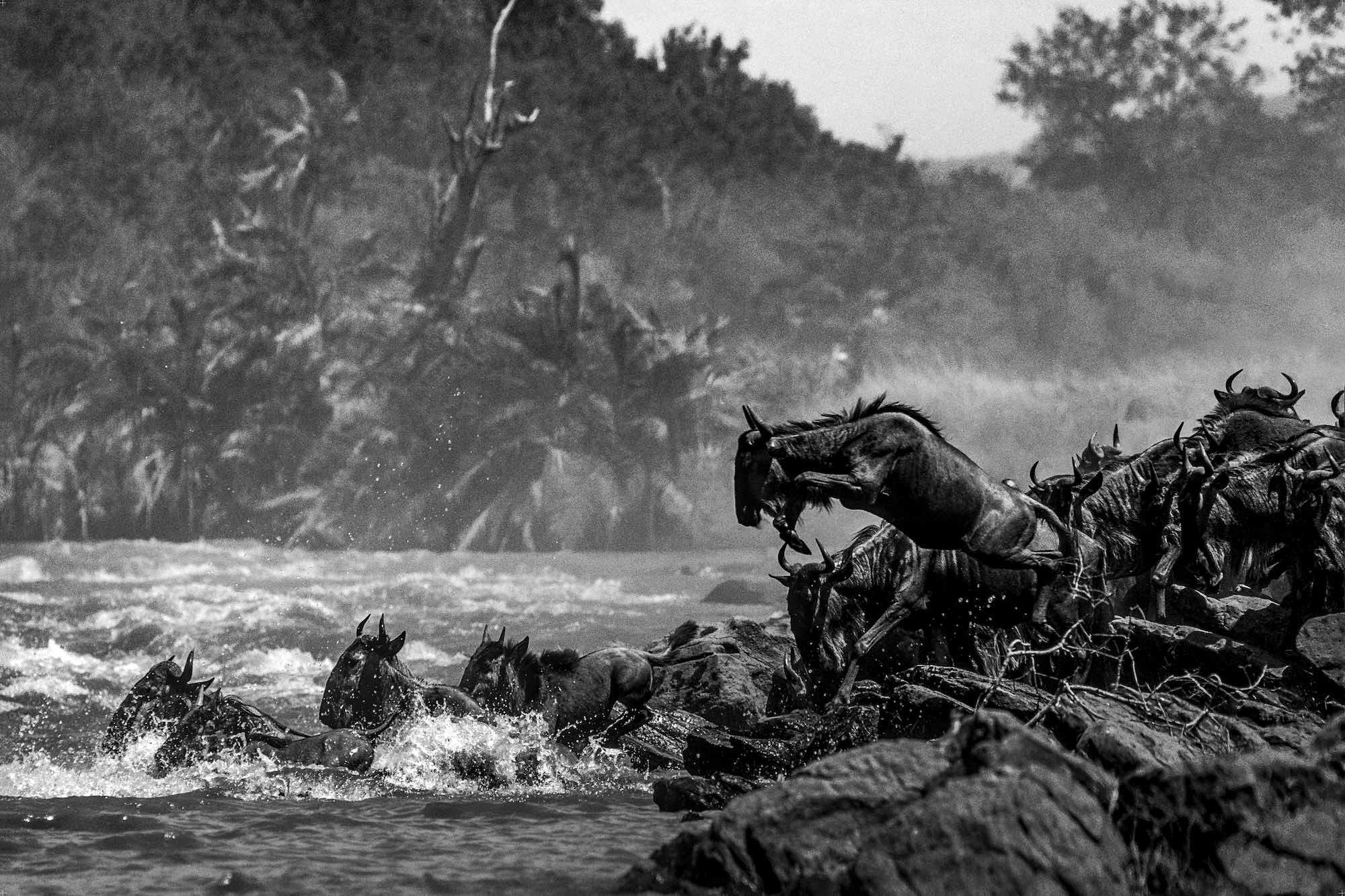 Mara River - Yann Arthus-Bertrand