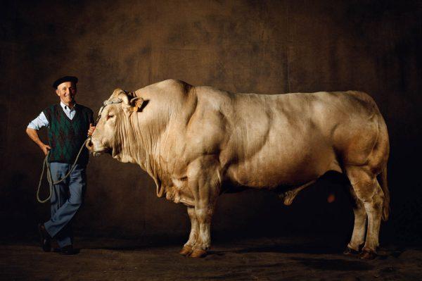 Taureau El Diego, Yann Arthus-Bertrand Photographie