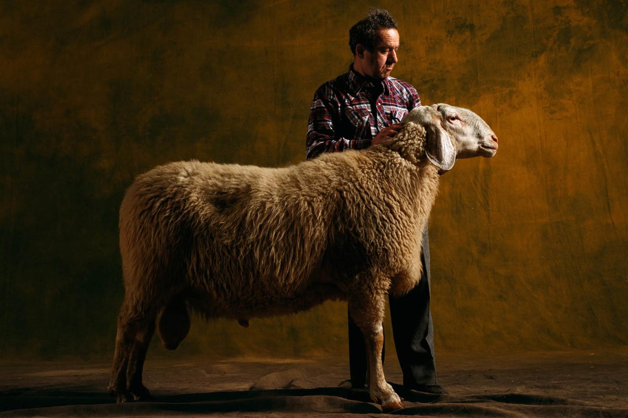 Bergamasca ram, Sheep - Yann Arthus-Bertrand