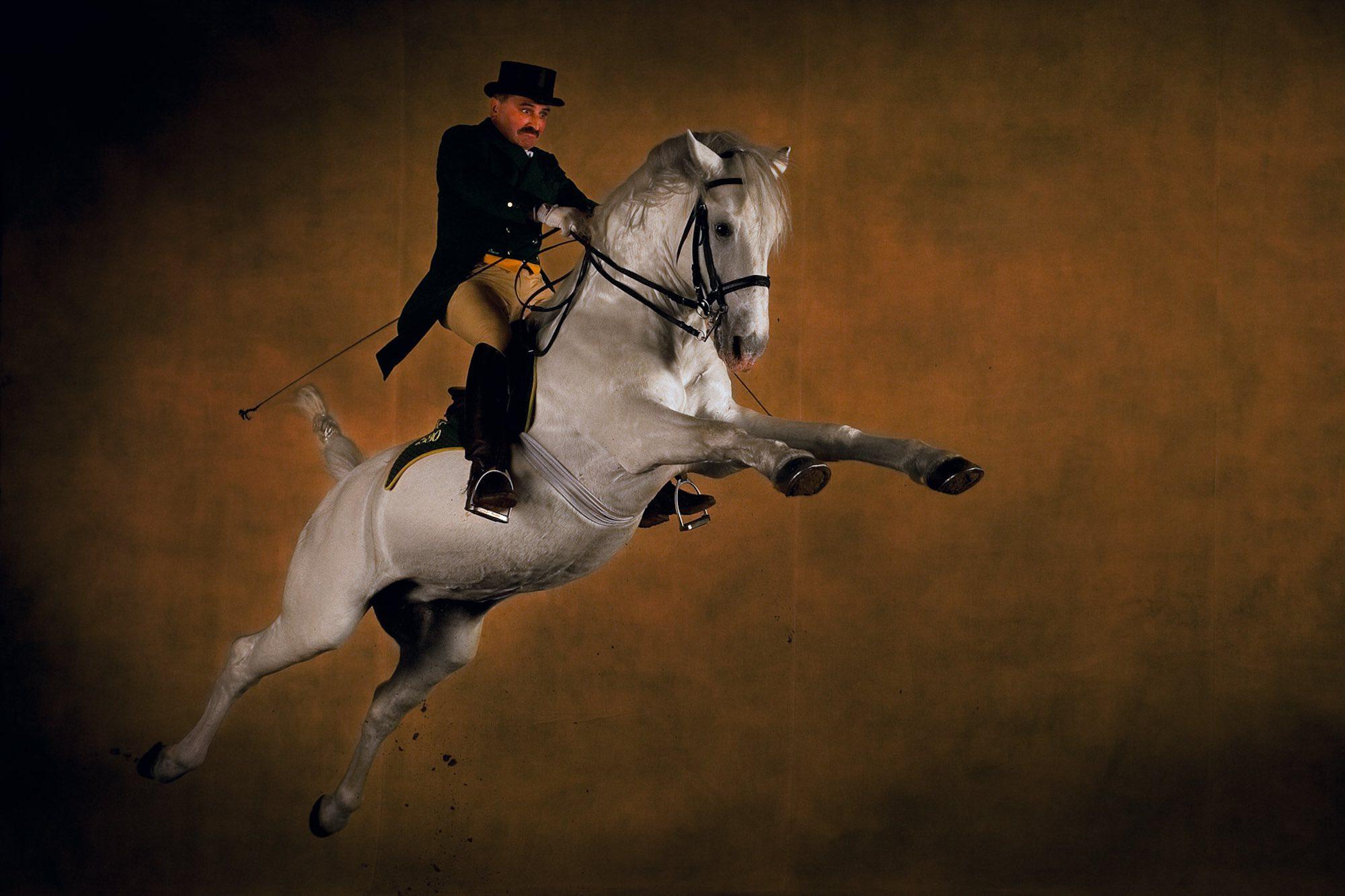 Lipizzaner stallion - Yann Arthus-Bertrand