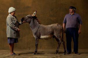 Provencal donkey, France - Yann Arthus-Bertrand Photography