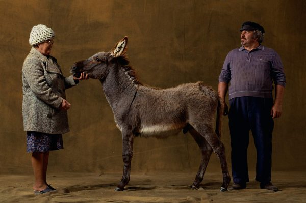 Provencal donkey, France - Yann Arthus-Bertrand Photography