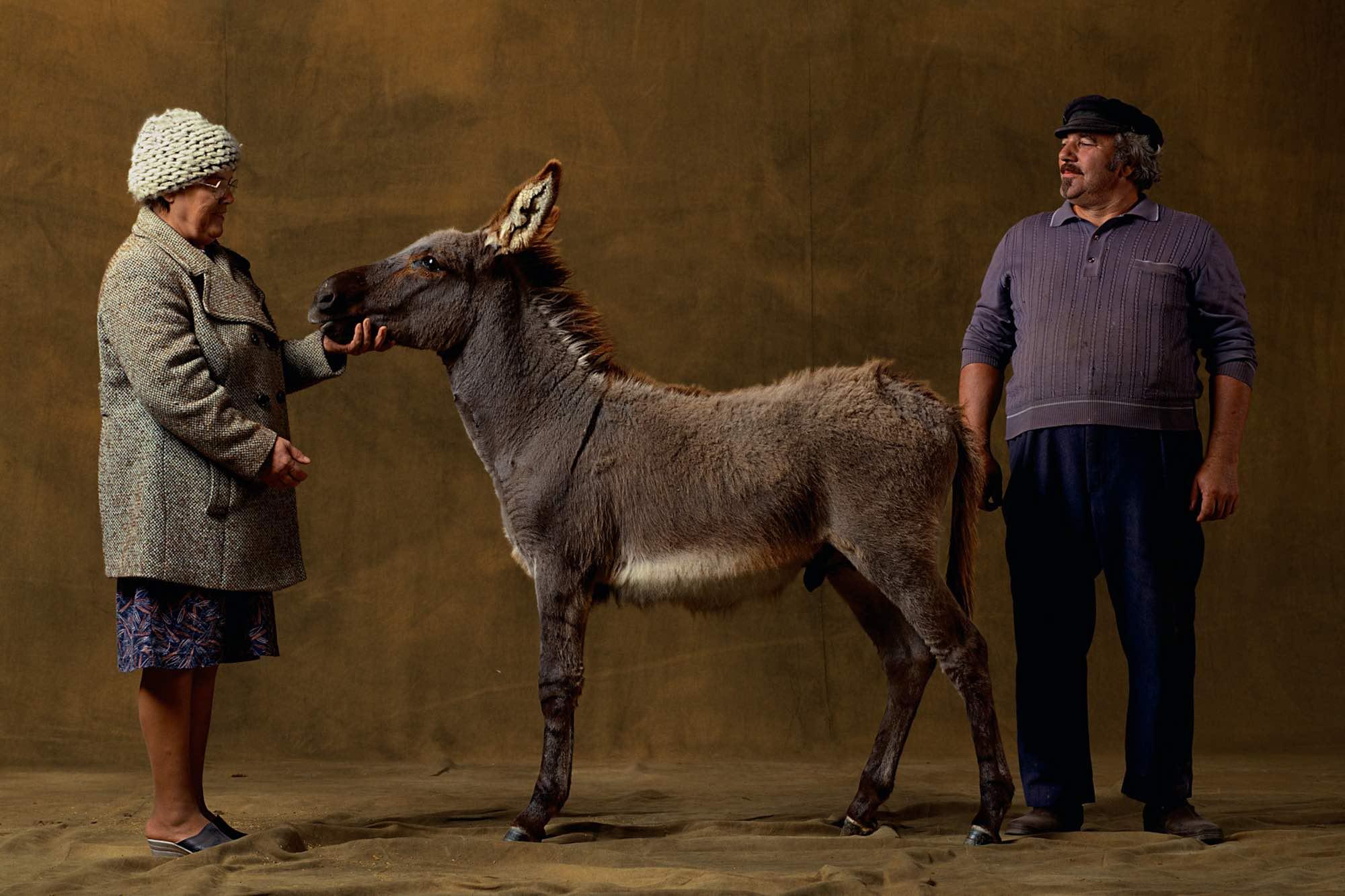 Provencal donkey - Yann Arthus-Bertrand