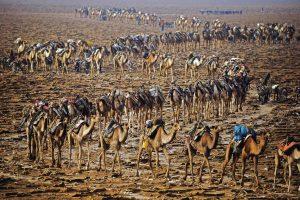 Caravane, Ethiopie - Yann Arthus-Bertrand Photographie