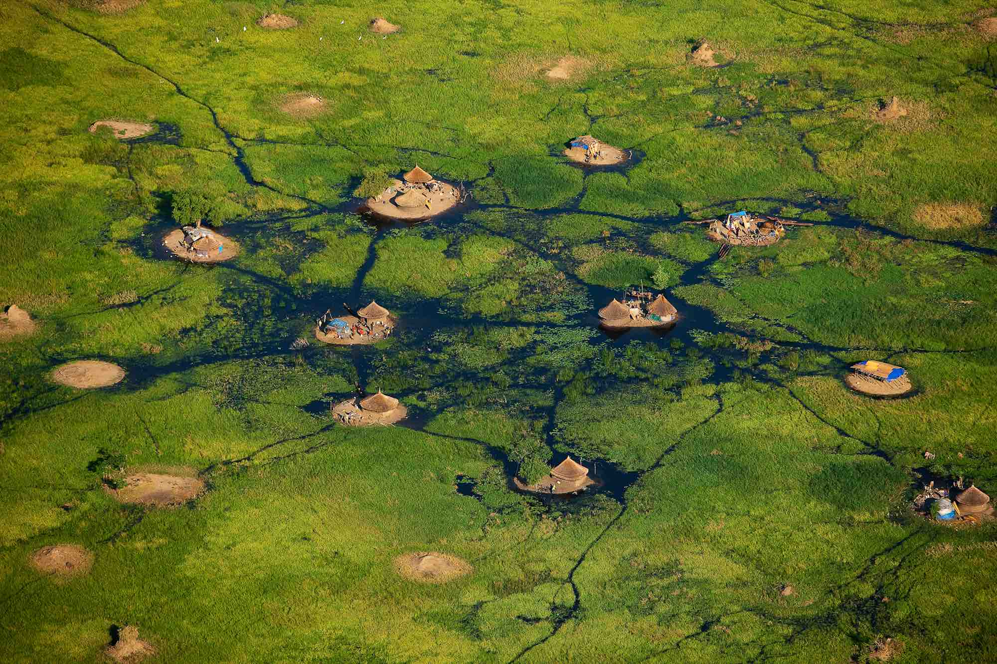 Swamps - Yann Arthus-Bertrand