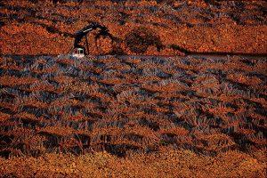 Bois, Suède - Yann Arthus-Bertrand Photographie