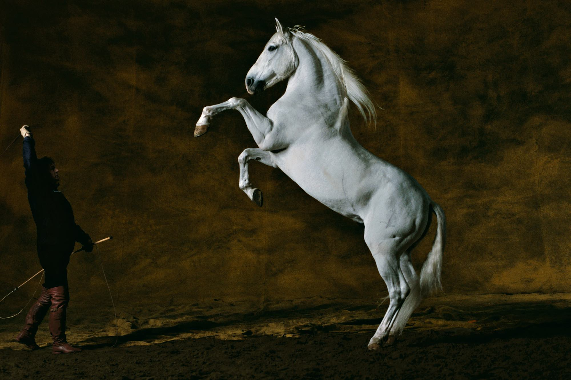 Pure-bred spanish stallion - Yann Arthus-Bertrand