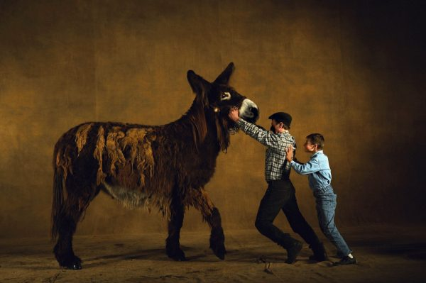 Poitou donkey mare, France - Yann Arthus-Bertrand Photo