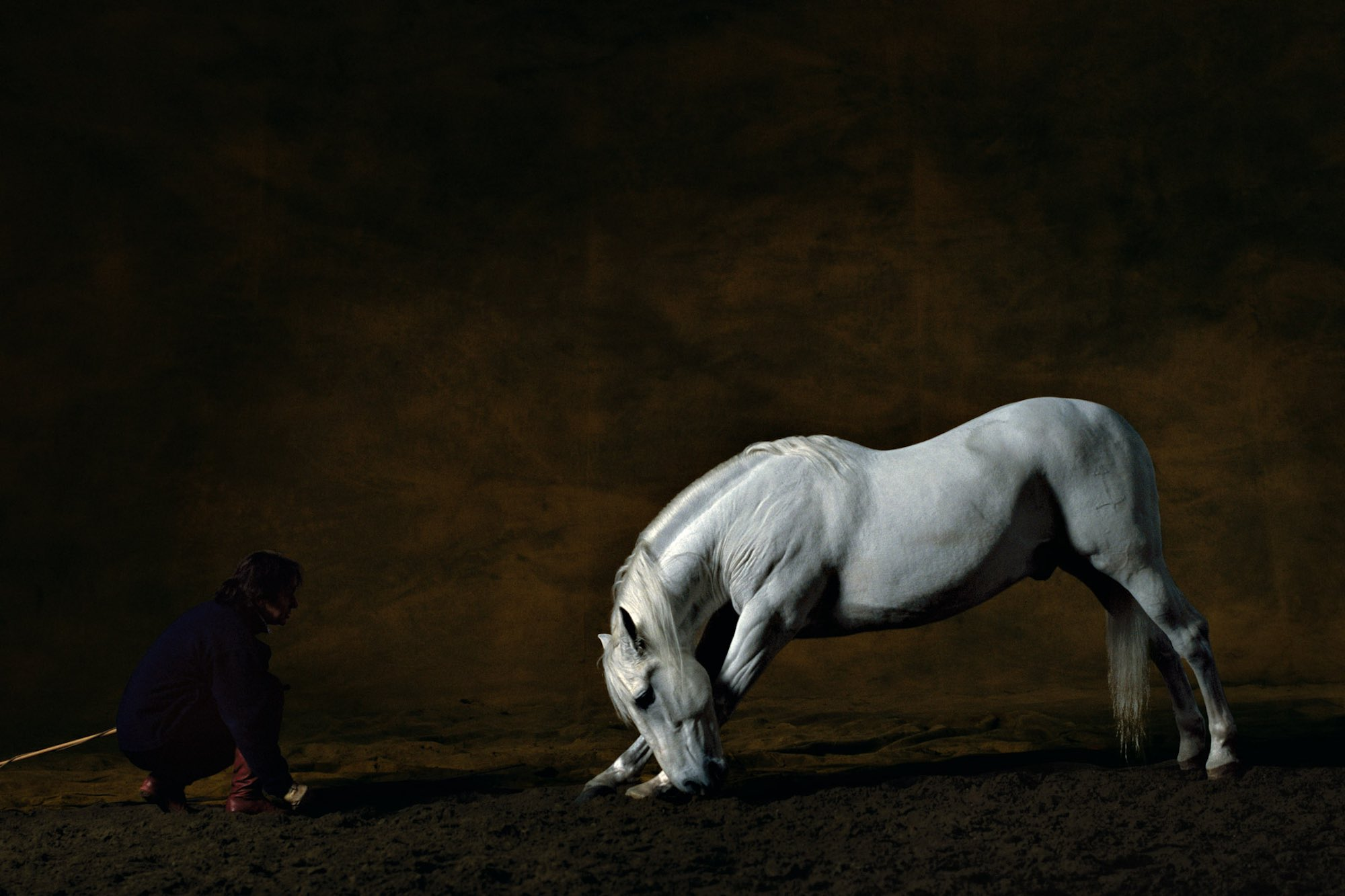 Pure-Bred Spanish stallion 2 - Yann Arthus-Bertrand