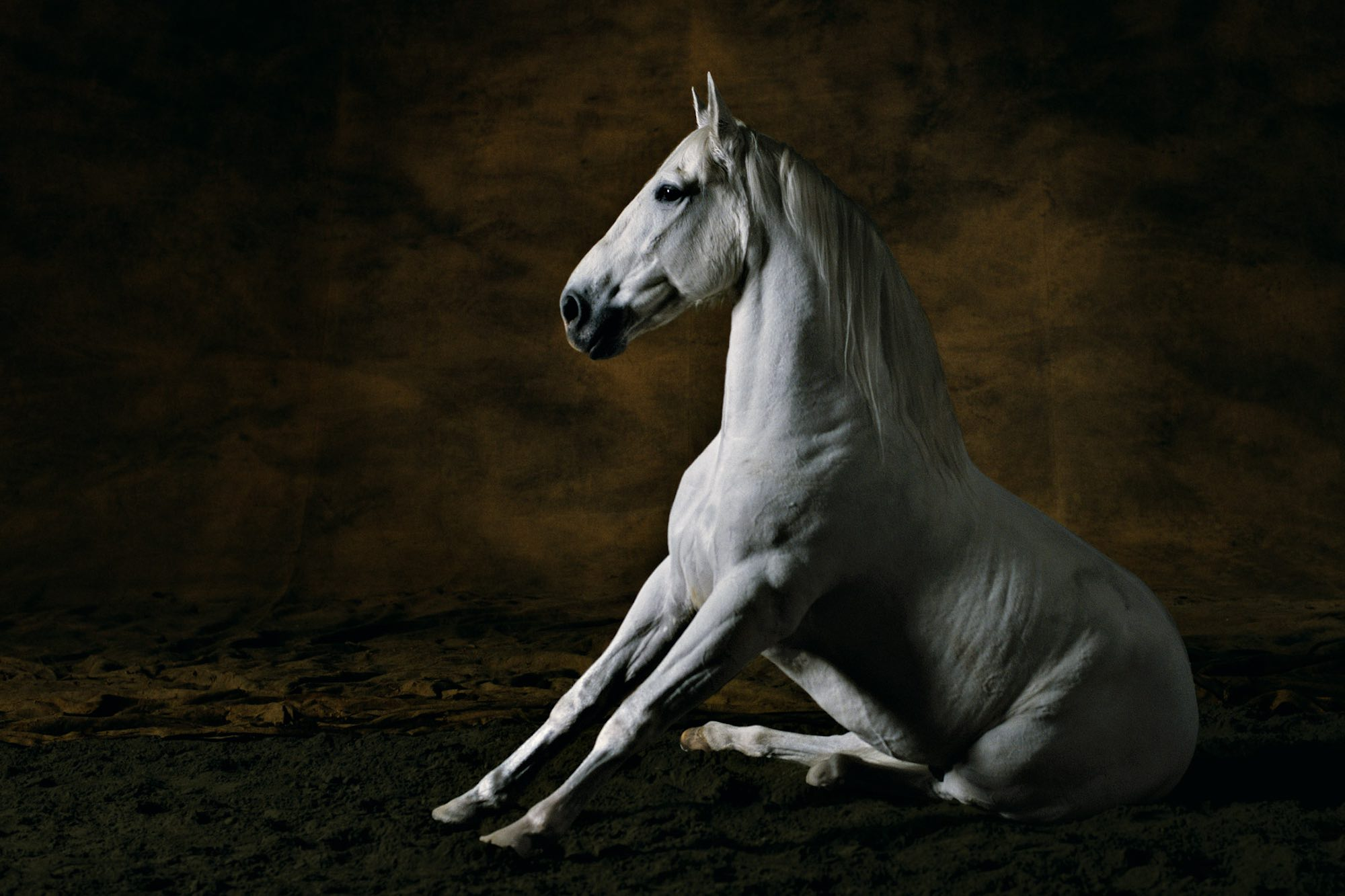 Pure-Bred Spanish stallion 3 - Yann Arthus-Bertrand