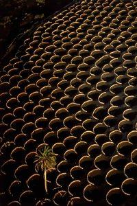 Vineyards, Spain - Yann Arthus-Bertrand Photography