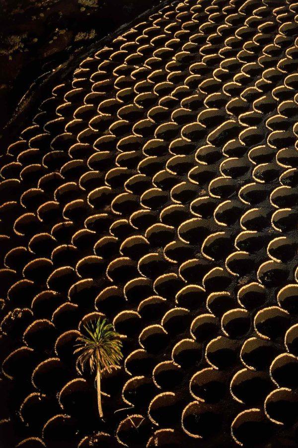 Vignes, Espagne - Yann Arthus-Bertrand Photographie