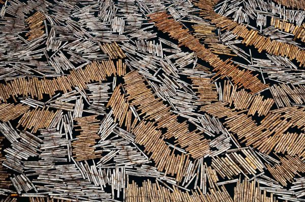 Floating wood, Gabon - Yann Arthus-Bertrand Photo