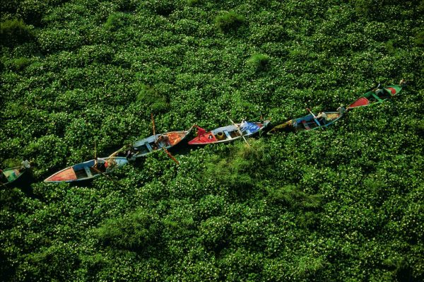 Water Hyacinths on the Nile, Egypt - Yann Arthus-Bertrand Photo