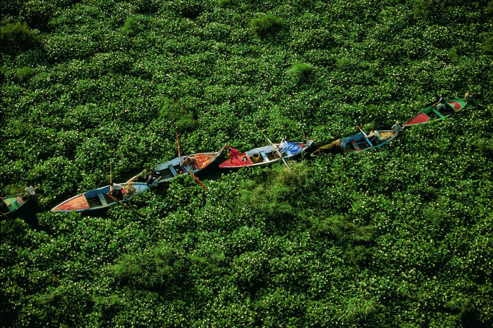Water Hyacinths on the Nile - Yann Arthus-Bertrand