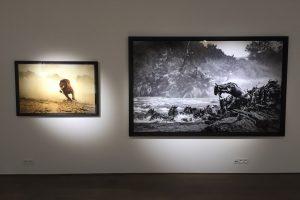 Yann Arthus-Bertrand Photo