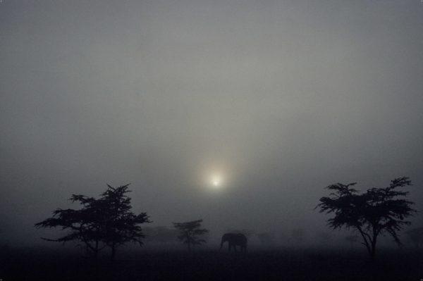 Un éléphant, les arbres et la lumière, Kenya - Yann Arthus-Bertrand photo