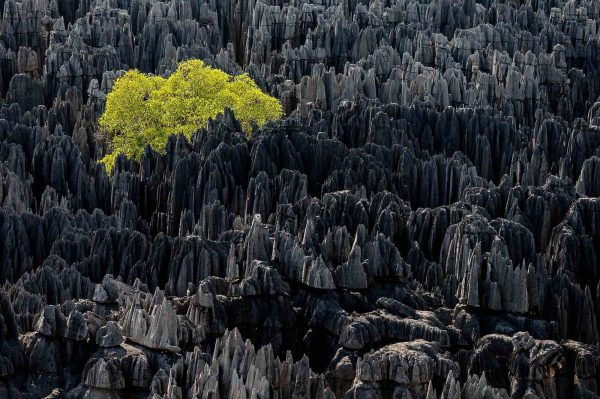 Forest, Madagascar - Yann  Arthus-Bertrand Photo