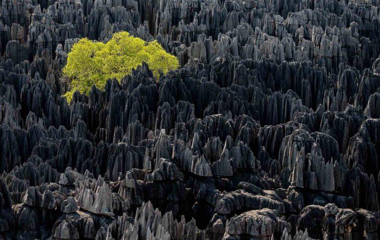 Origine du monde, Madagascar - Yann Arthus-Bertrand Photo