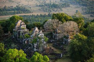 Trees, Cambodge - Yann Arthus-Bertrand Photo