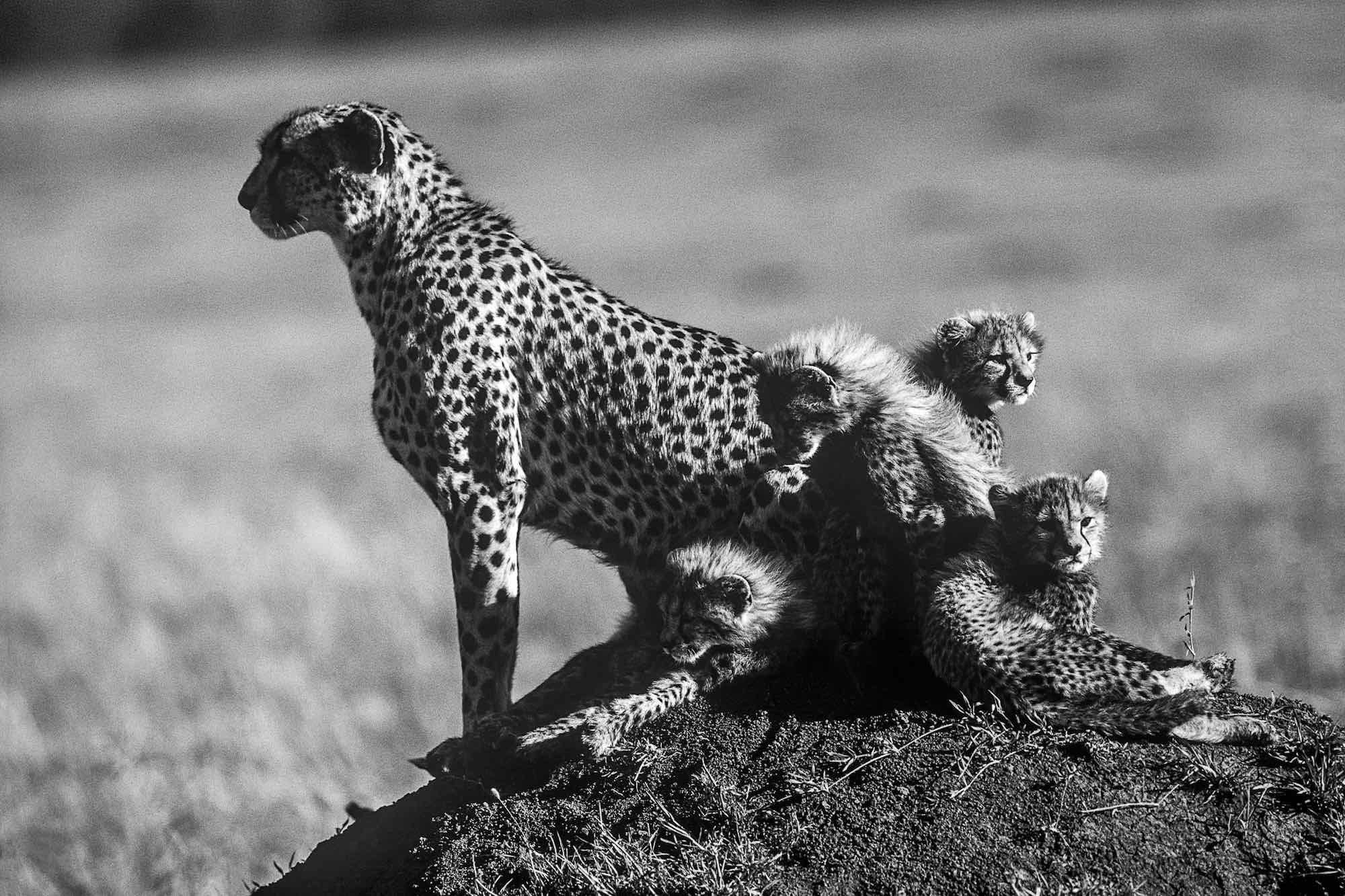 Family - Yann Arthus-Bertrand