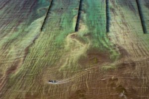Algae and the man, France - Yann Arthus-Bertrand Photo