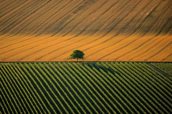 Agricultural landscape, France - Yann Arthus-Bertrand Photo