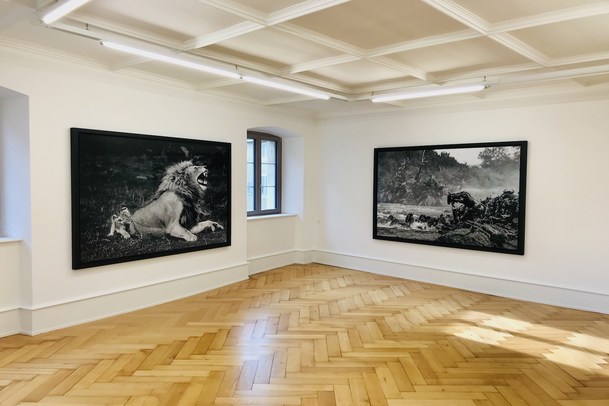 Exposition, Genève - Yann Arthus-Bertrand Photo