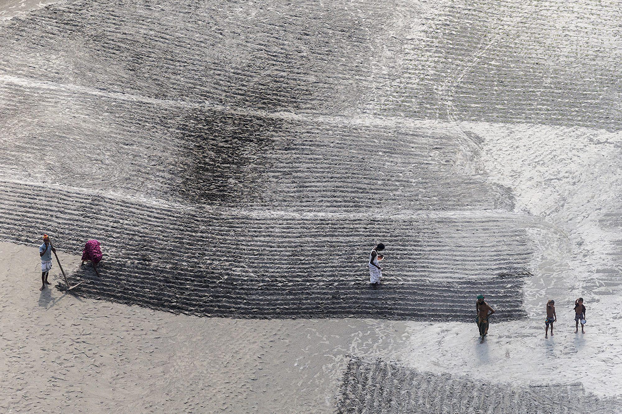 Rice farmers - Yann Arthus-Bertrand